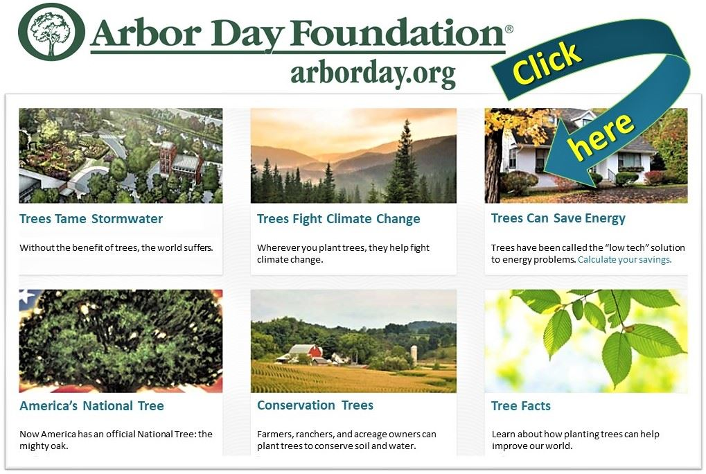 Arbor Day Foundation Web Graphic